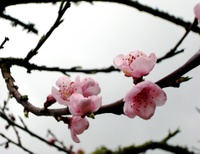 Fleurs_2